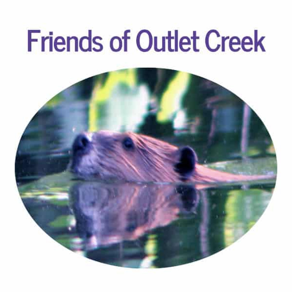 Friends of Outlet Creek