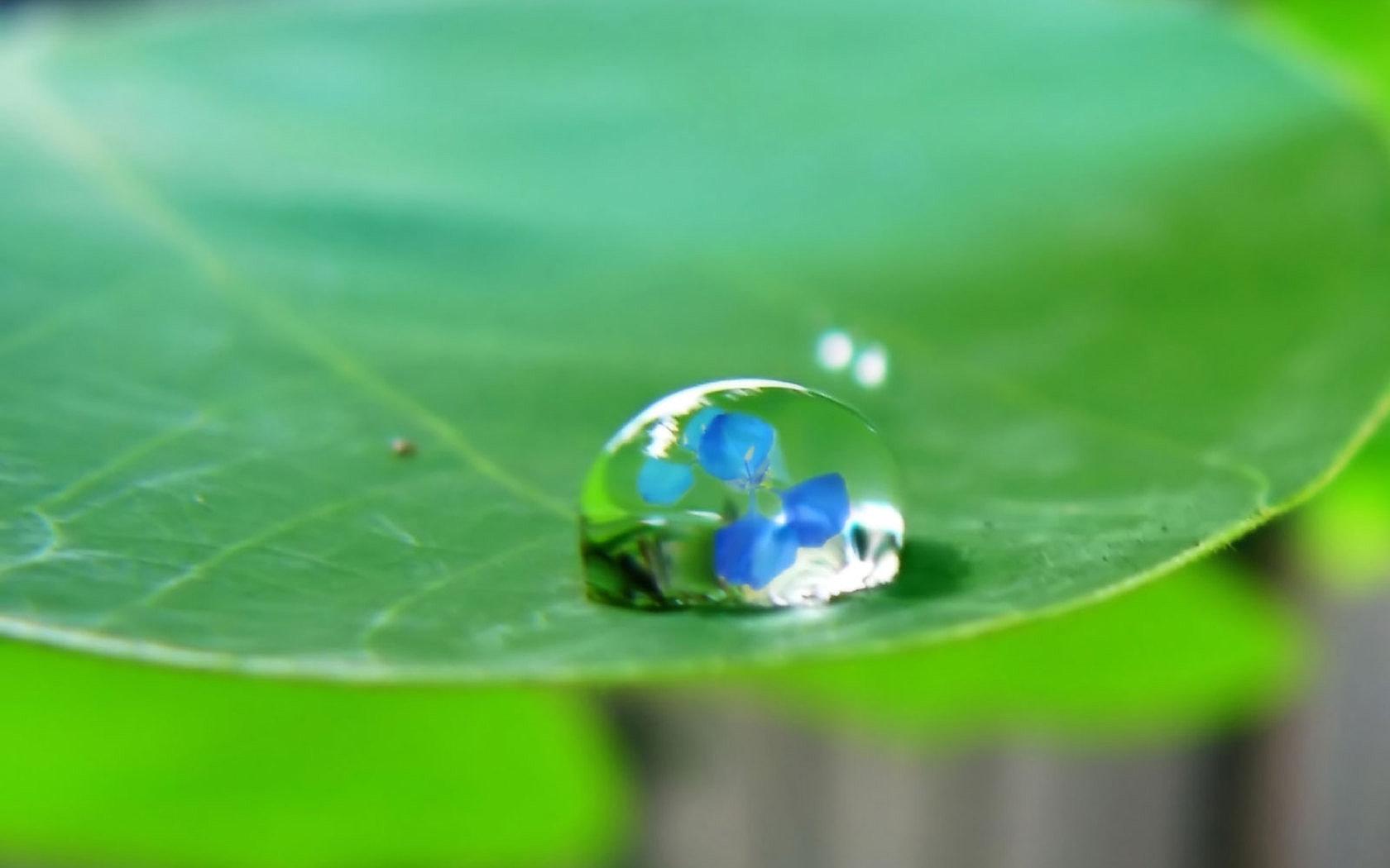 water_drop_on_leaf_w_1680x1050