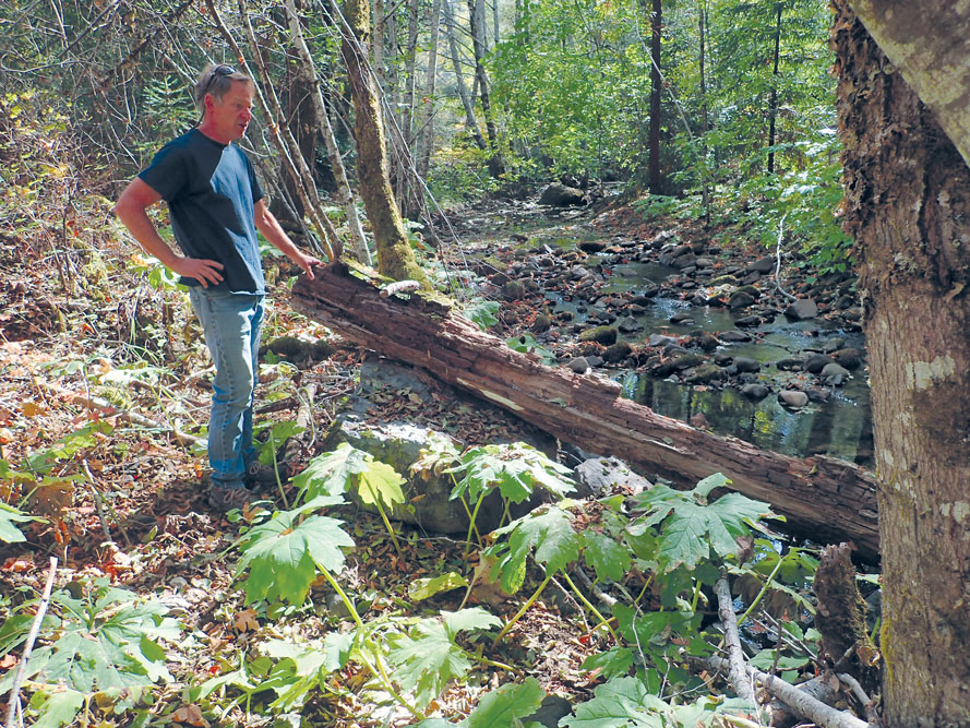 Man with one hand on hip and another on a fallen tree beside a creek in a forest