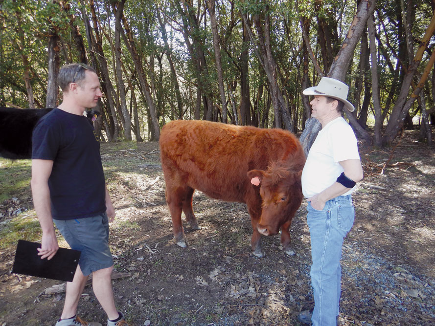 two men facing each other and speaking, cattle in the background.