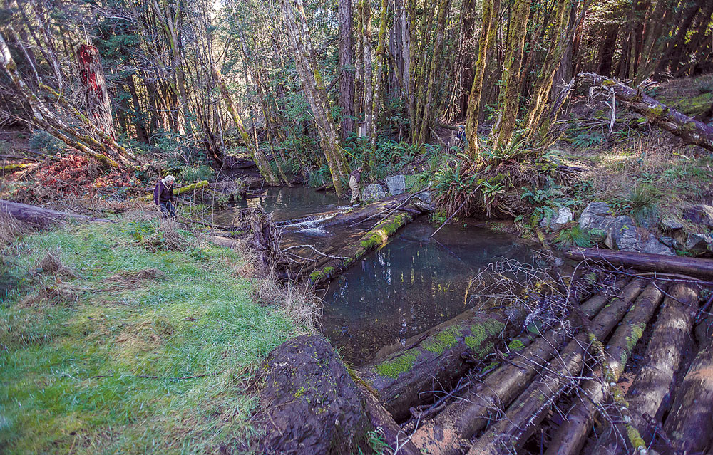 Instream log weirs installed by MSG in Baker Creek in 2012. Mattole River Watershed.
